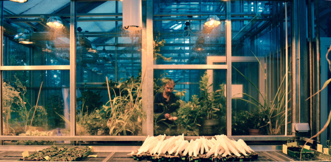 Occupied with Plants - photo by Priscila Buschinelli